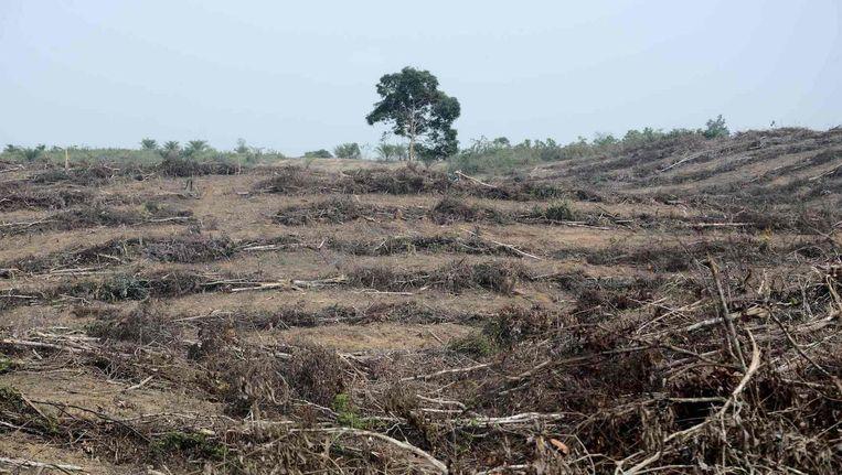 Een stuk grond op Sumatra, platgebrand om palmoliebomen te planten. Beeld afp