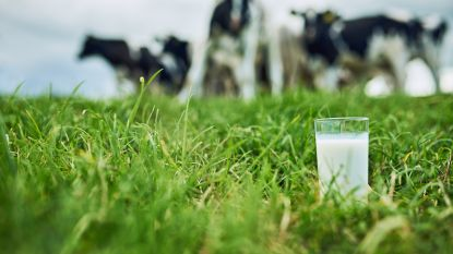 PETA roept op om geen melk meer te drinken. Omdat het racistisch is