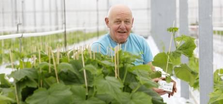 Cor plant voor het goede doel duizenden komkommers in Oosterhoutse kas: 'Hij verdient zeker een lintje'