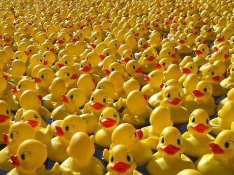 15.000 badeendjes racen deze zomer door de Piushaven