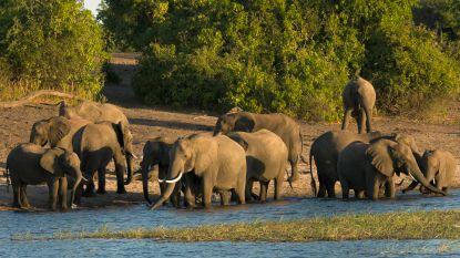 Botswana veilt 'pakketten' voor jacht op olifanten