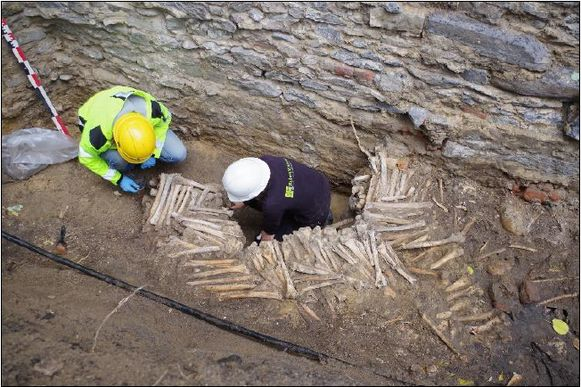De archeologen leggen de enorme massa beenderen bloot.