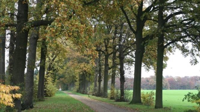 Boomverzorgers nemen bomenrij eeuwenoude Ginhovendreef onder handen