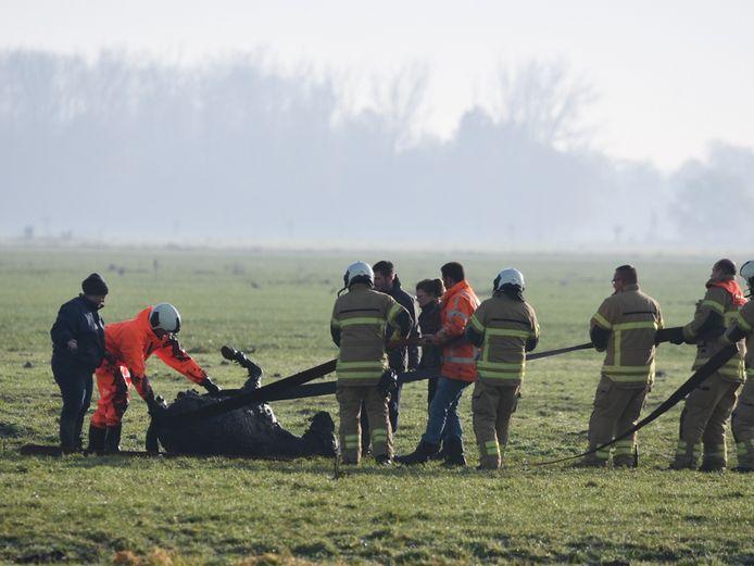 De brandweer haalde het paard met enige inspanning uit de sloot.