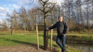 """N-VA Zoersel wilde fruitbomen pastorijtuin enkel verplaatsen om ze te doen overleven: """"Laat de rust wederkeren"""""""