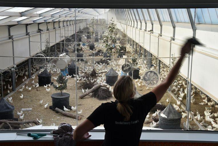 Elke dag worden de ramen van de van de bezoekersruimte schoongemaakt. Beeld null