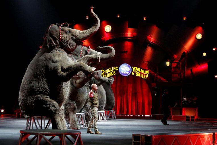 Vorig jaar werden onder druk van juridische procedures de olifanten uit het programma geschrapt. Beeld null