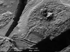 """Des structures neuronales """"intactes"""" vieilles de 2.000 ans prélevés sur une victime de l'éruption du Vésuve"""