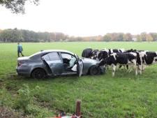 Dronken vrouw steelt vermoedelijk auto, crasht in weiland, verzet zich bij aanhouding én heeft geen rijbewijs