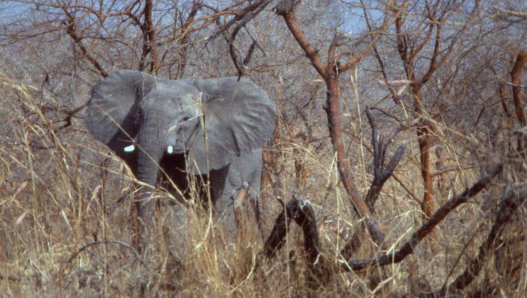 Het park, Bouda Ndjidda, staat bekend om zijn grote olifantenpopulatie. Beeld null
