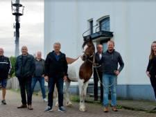 Goorse paardenmarkt maakt doorstart: 'Dierenwelzijn staat voorop'