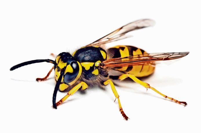 Wespen zorgen deze tijd weer voor veel overlast en door corona neemt dat alleen maar toe.