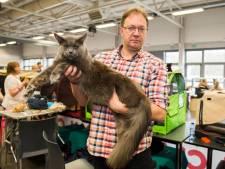 Katten blazen dit weekend verzamelen in Antwerp Expo