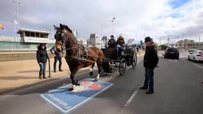 Stad zet paardenkoetsen op stal tijdens hittegolf