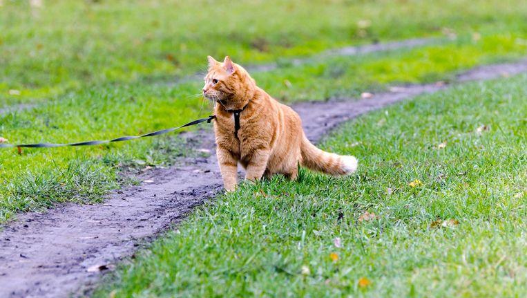 De SGP in Kapelle ziet de kat graag aan de lijn. Beeld Colourbox