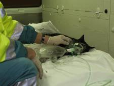 Actie om zuurstof voor dieren in ademnood