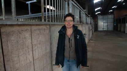 Therapie met ezels is heilzaam om angsten te overwinnen