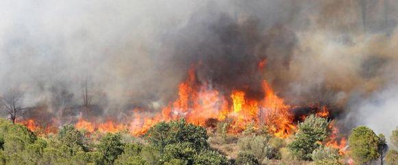 Het struikgewas schoot in brand.