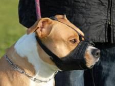 Hond Otje afgemaakt na beet in gezicht. Vlissingse: 'Ik voel me niet vrouwelijk meer'