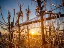 Fruitsector Maas en Waal steeds verder in de knel door corona