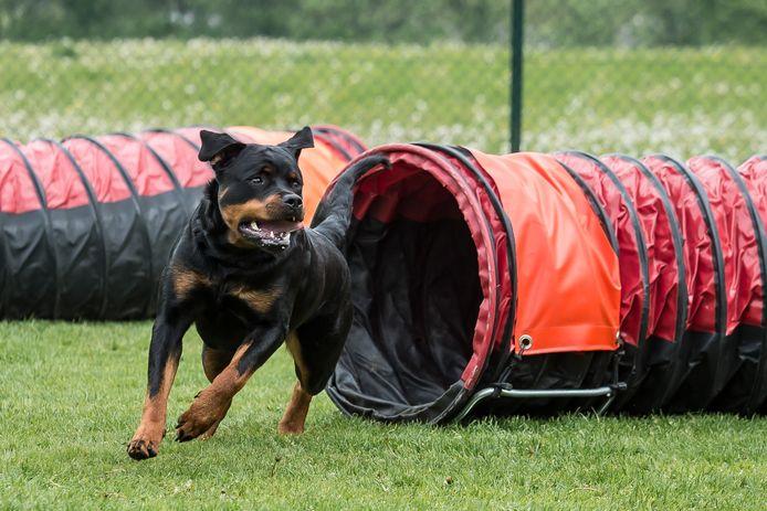 Omwonenden geven toe dat sinds de honden in de loodsen zitten de overlast sterk is afgenomen.