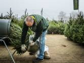 Oh denneboom! De grootste kerstboomfabels en aanschaftips