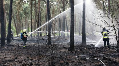 Weer 1 hectare bos in vlammen opgegaan