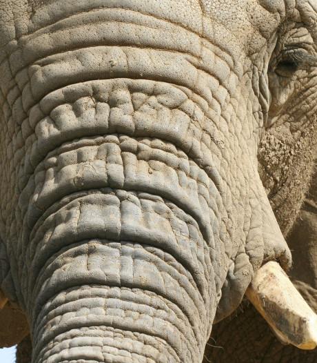 Botswana geeft olifantenjacht vrij