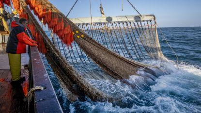 Noordzee wordt steeds warmer: kabeljauw trekt weg, ansjovis zwemt naar hier