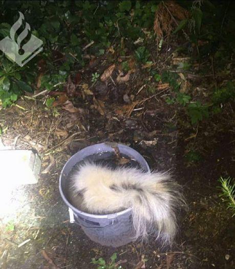 Niet het doden van een stinkdier, maar de manier waaróp maakt een Eindhovenaar strafbaar