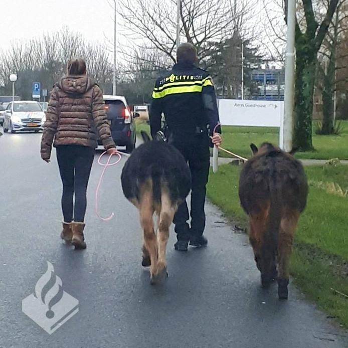 De politie wist de ezels met hulp weer naar de wei te begeleiden.
