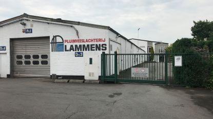 Stad Torhout belooft logistieke steun aan VDAB na faillissement van pluimveeslachterij Lammens