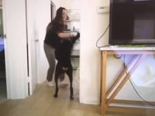 Par erreur, une Youtubeuse publie une vidéo d'elle en train de battre son chien