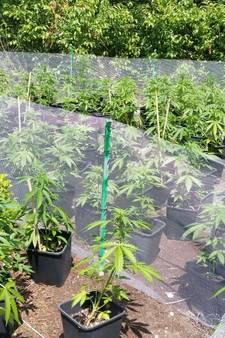 Ruim 250 hennepplanten aangetroffen in de bossen bij Schaijk