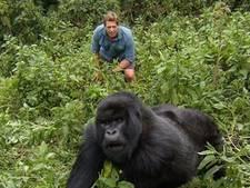 Freek Vonk op meter afstand van dominante wilde berggorilla