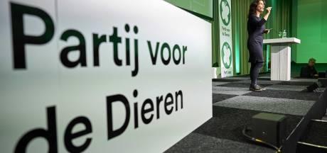 Partij voor de Dieren vraagt om sluiten van de eendensector in Nederland