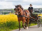 Vandaag 104 jaar geleden: paardensmokkelaars