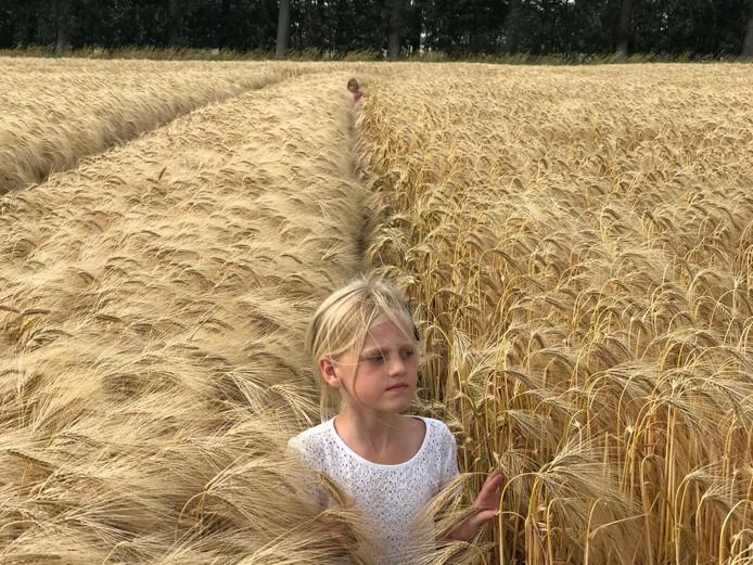 Weekwinnaar (5): Als dochter van de bakker moet je natuurlijk wel weten hoe de tarwe groeit, schrijft Ria Uljee uit Westmaas. Zij fotografeerde haar dochters in een tarweveld in de Hoeksche Waard.