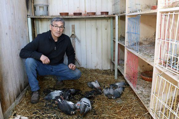 Gustaaf Jaques bij zijn negen duiven die het leven lieten door rookintoxicatie.