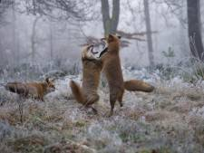 VisitVeluwe zoekt buitenlocaties voor natuurfilm WILD