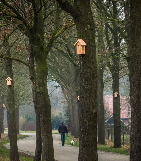 Oosterhout zet koolmezen in bij bestrijding eikenprocessierups