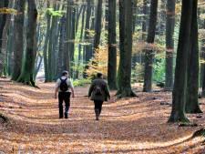 Onderzoek: lukraak opkopen veehouderijen helpt Veluwse natuur niet