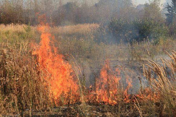 Zo'n 2.500 vierkante meter gras en struiken ging in vlammen op aan de Natiestraat in Verrebroek.