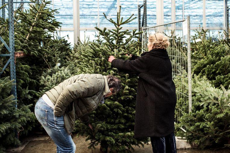Welke Is Het Groenst De Echte Of De Valse Kerstboom De Morgen