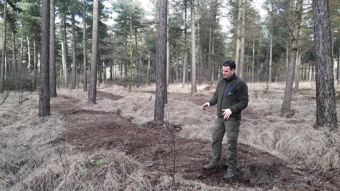 Erik de Jonge in het bos van Wouwse Plantage waar Brabants Landschap af en toe de grond freest om pijpenstro te verwijderen en jonge boompjes de kans te geven te groeien.