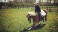 Twee paarden sterven op één dag, eigenares denkt aan kwaad opzet