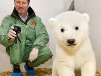 Een week goed nieuws: elf weken oud ijsbeertje laat zich zien in Berlijnse zoo en andere verhalen die je blij maken