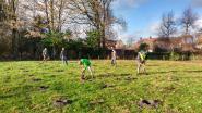 Stevige handenarbeid: 1 hectare nieuw bos aangeplant