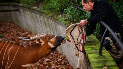 FOTOREEKS. Ook dieren in de Zoo zijn braaf geweest dit jaar: Sinterklaas komt groenten, zaden, vis en insecten uitdelen