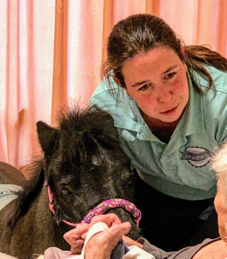 Paard op glitterschoentjes in verpleeghuis Sint-Michielsgestel
